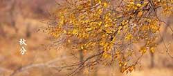 秋分   秋季好养生
