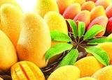 上班族吃什么水果能防辐射